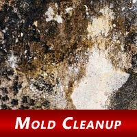 Tips to Prevent Post-Flooding Mold at Home