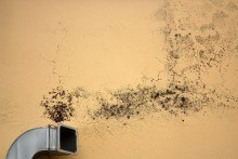 Black Mold Removal In Your Business